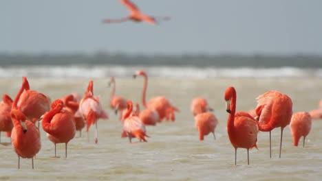 Flamingo-21
