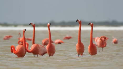Flamingo-22