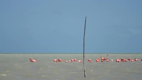 Flamingo-23