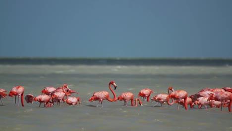 Flamingo-24