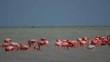Flamingo-25