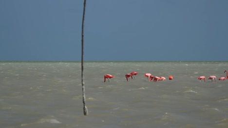 Flamingo-26