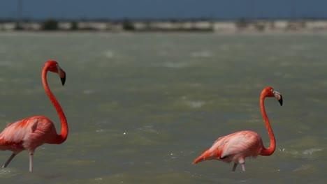 Flamingo-27
