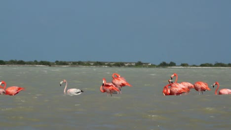 Flamingo-28