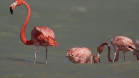 Flamingo-29