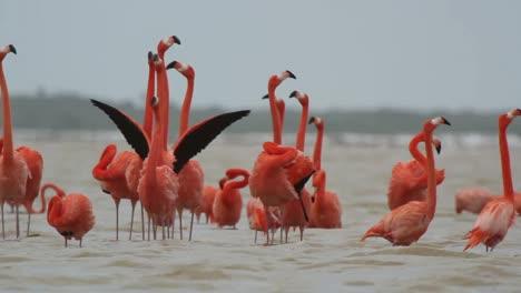 Flamingo-40