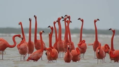 Flamingo-41