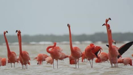 Flamingo-44