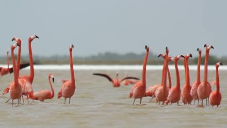 Flamingo-45