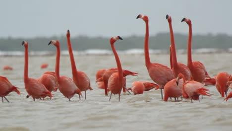 Flamingo-46