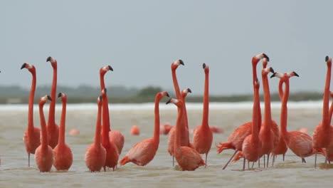 Flamingo-47