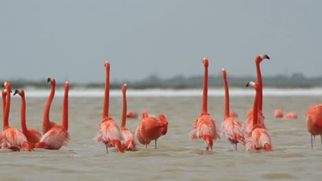 Flamingo-48