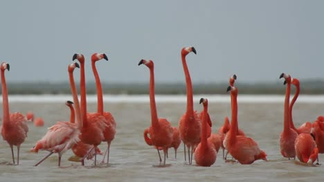 Flamingo-49