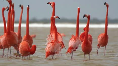 Flamingo-51