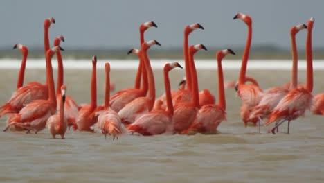 Flamingo-52