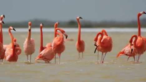 Flamingo-54