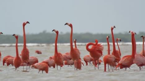 Flamingo-55
