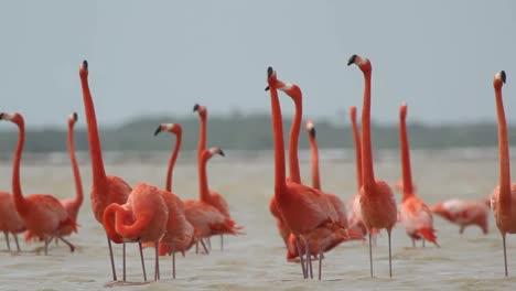 Flamingo-57