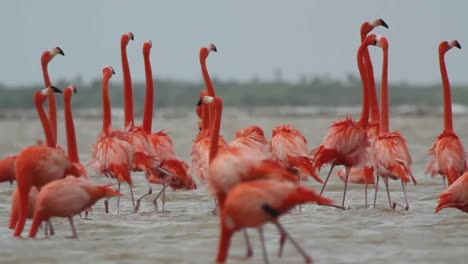 Flamingo-58