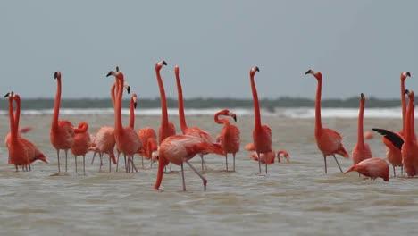 Flamingo-60