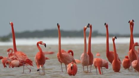 Flamingo-64