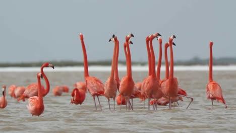 Flamingo-69
