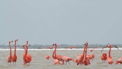 Flamingo-72