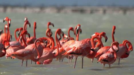 Flamingo-73