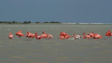 Flamingo-76