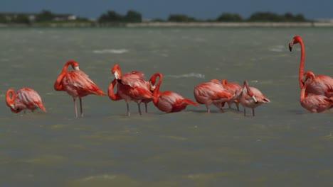 Flamingo-77