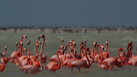 Flamingo-80