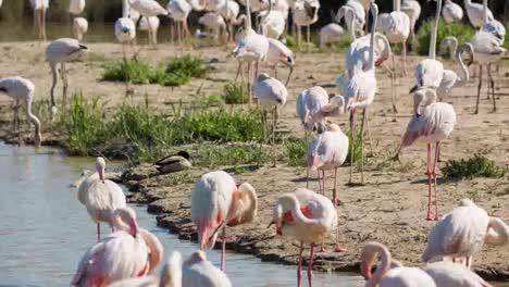 Flamingos-Timelapse0