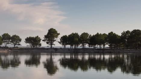 Galicia-Dune-Trees-02