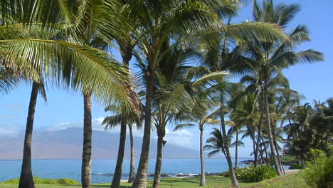 Beautiful-Palms-Line-A-Tropical-Beach-In-Hawaii