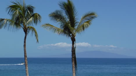 Beautiful-Palms-Line-A-Seaside-Vista-In-Hawaii
