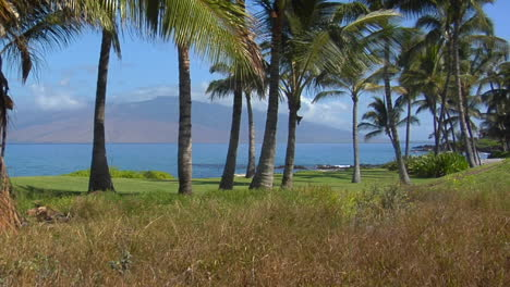 A-Tilt-Up-To-A-Beautiful-Palm-Lined-Beach-In-Hawaii