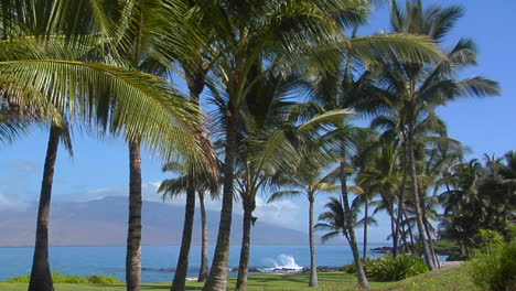 Palm-Trees-Grow-Along-A-Beautiful-Stretch-Of-Beach-In-Hawaii