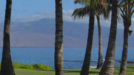 A-Pan-Across-Palm-Trees-And-A-Beautiful-Bay-In-Hawaii