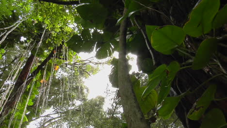 A-Great-Low-Angle-Shot-Of-A-Rainforest-Or-Tropical-Jungle