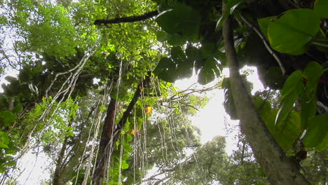 A-Great-Low-Angle-Shot-Of-A-Rainforest-Or-Tropical-Jungle-1