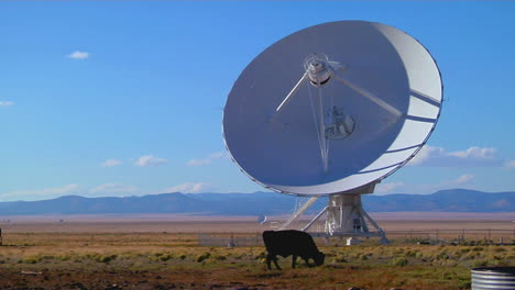 A-Satellite-Dish-Sits-In-A-Field-With-Cattle-2