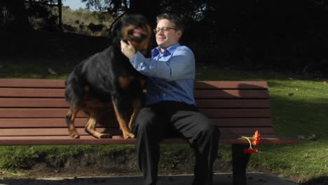 A-dog-jumps-up-onto-the-park-bench-so-a-man-can-pet-him-and-rub-him-vigorously
