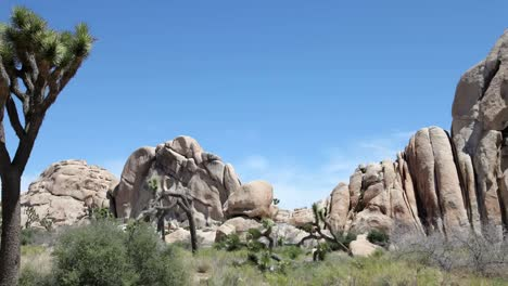 Joshua-Tree-National-Park-Pan-1