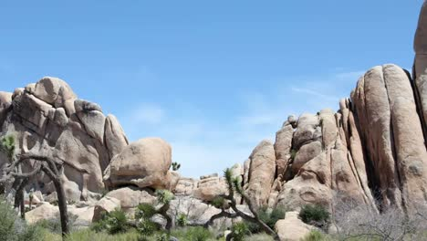Joshua-Tree-National-Park-Pan-2