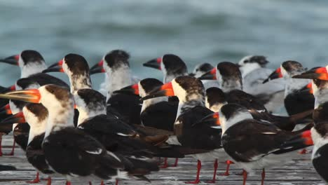 Largartos-Birds-00