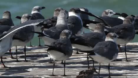 Largartos-Birds-07
