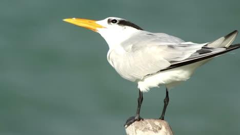 Largartos-Birds-27