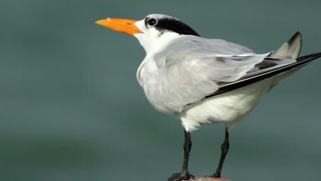 Largartos-Birds-28