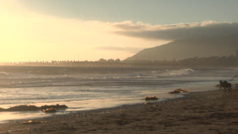 A-man-walks-with-his-two-dogs-along-a-sandy-beach