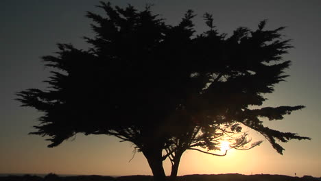 A-tree-is-silhouetted-at-golden-hour
